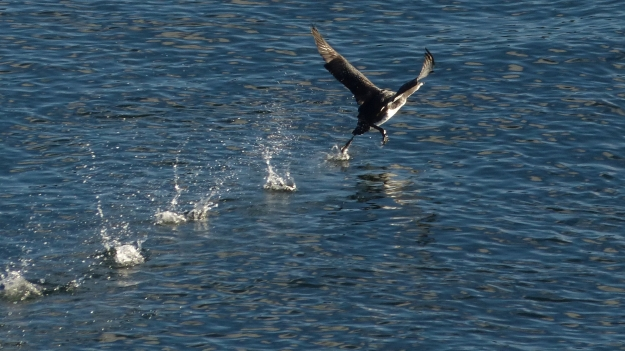 loon-takeoff-1-of-3-p1180123
