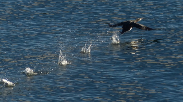 loon-takeoff-2-of-3-p1180124